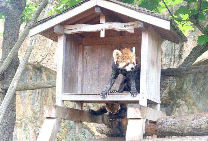 """再自然也不过如此!快来免费入场的横浜""""野毛山动物园"""""""