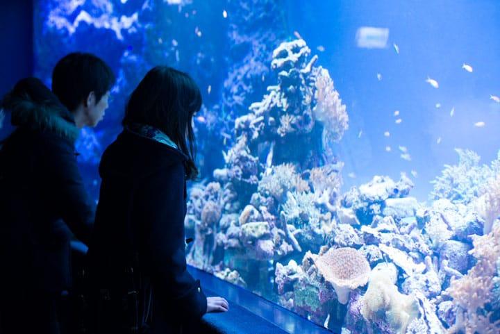 位在都市的正中間「Sunshine水族館」好比天空的綠洲