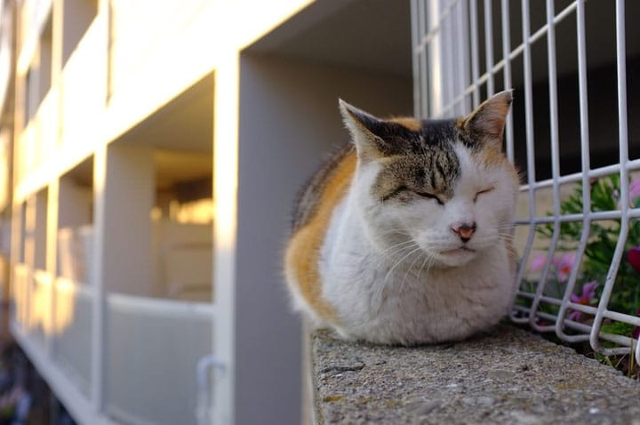 เดินกินอร่อยในย่านแมวจนตะวันตกดินที่ยานากะกินซ่า (Yanaka Ginza) ในโตเกียว