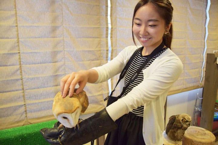 Japanese Encyclopedia: Animal Cafe