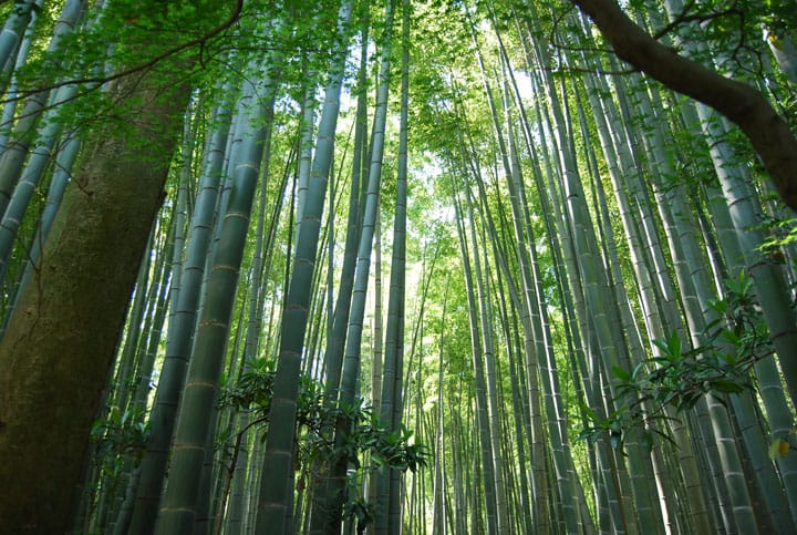 Kamakura, Hokokuji: A Secluded And Fascinating Bamboo Temple