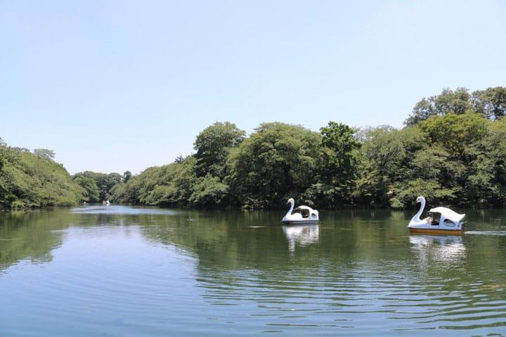 สวนสัตว์ก็มี! คาเฟ่ก็มี! สวนอิโนะคาชิระ  ที่พักผ่อนหย่อนใจในคิจิโจจิ เมืองน่าอยู่ที่สุดในญี่ปุ่น