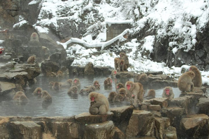 日本ならではの景色や風景!日本の遺産や文化を動画で紹介