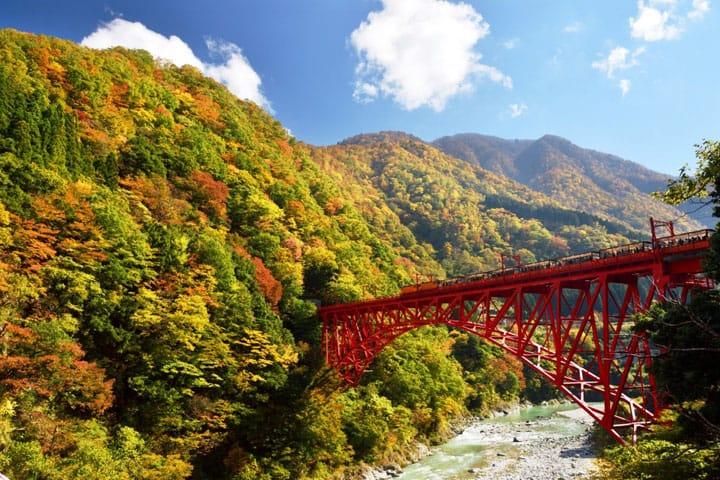 通过视频看日本秋季绝景 〜红叶・银杏・轨道小火车・吊桥〜