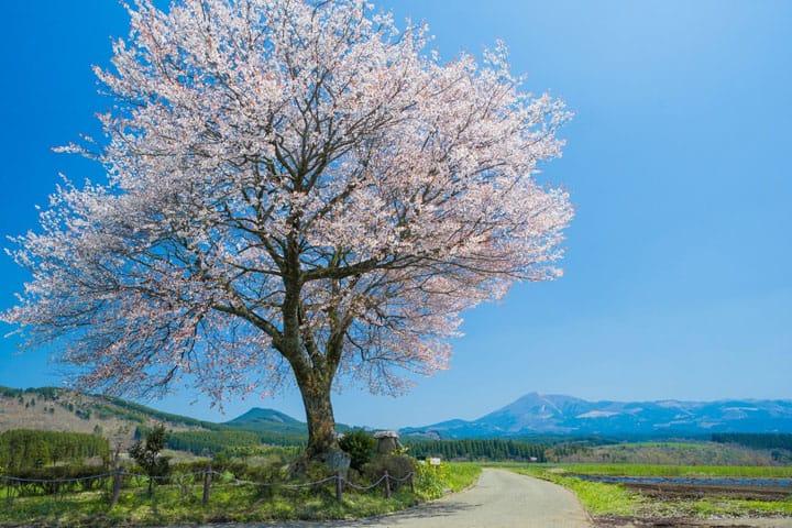 絶品グルメも絶景もある、熊本県の小国町の魅力を一挙紹介!