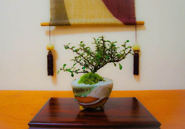 Complex But Simple Trees: The Green Art Of Bonsai