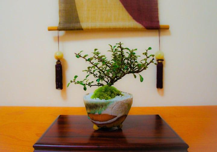 """即複雜又簡單,感受""""盆栽""""的藝術魅力"""