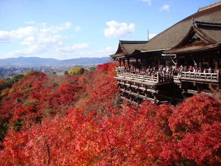 Tujuh Area Kyoto yang Wajib Dikunjungi di Musim Gugur
