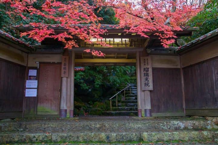 【京都·琉璃光院】寻找艺术般的红叶