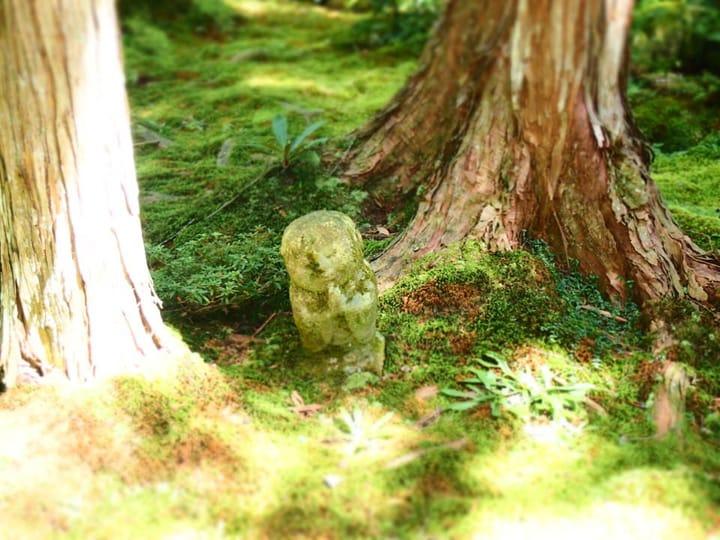 苔むした日本庭園で侘びを感じる。京都大原「三千院」