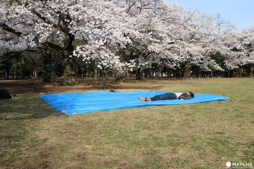 【基礎記事】鎌倉・桜の花見