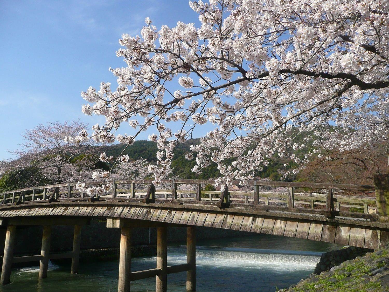 Chia Sẻ Kinh Nghiệm Du Lịch Nhật Bản Ngắm Hoa Anh Đào Nở