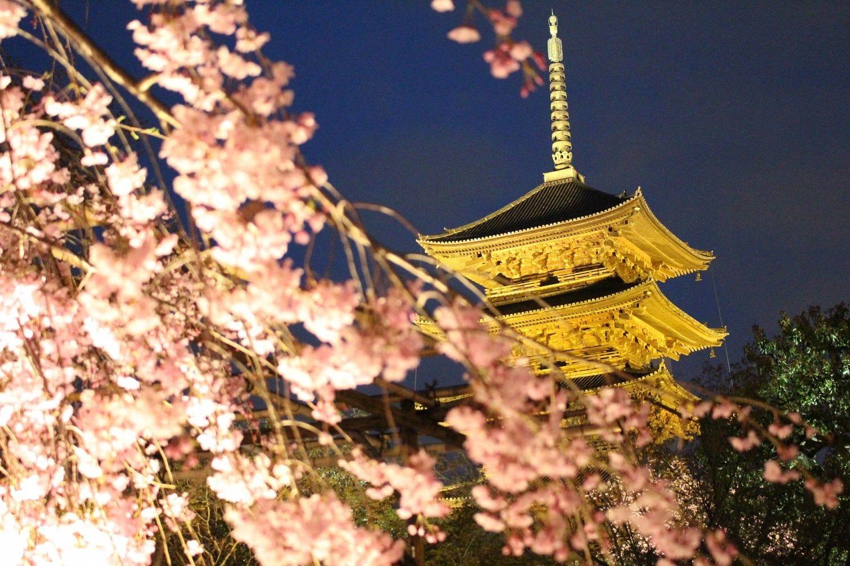 【SAKURA】15 แหล่งชมซากุระสุดเจ๋งในเกียวโตและข้อควรรู้!
