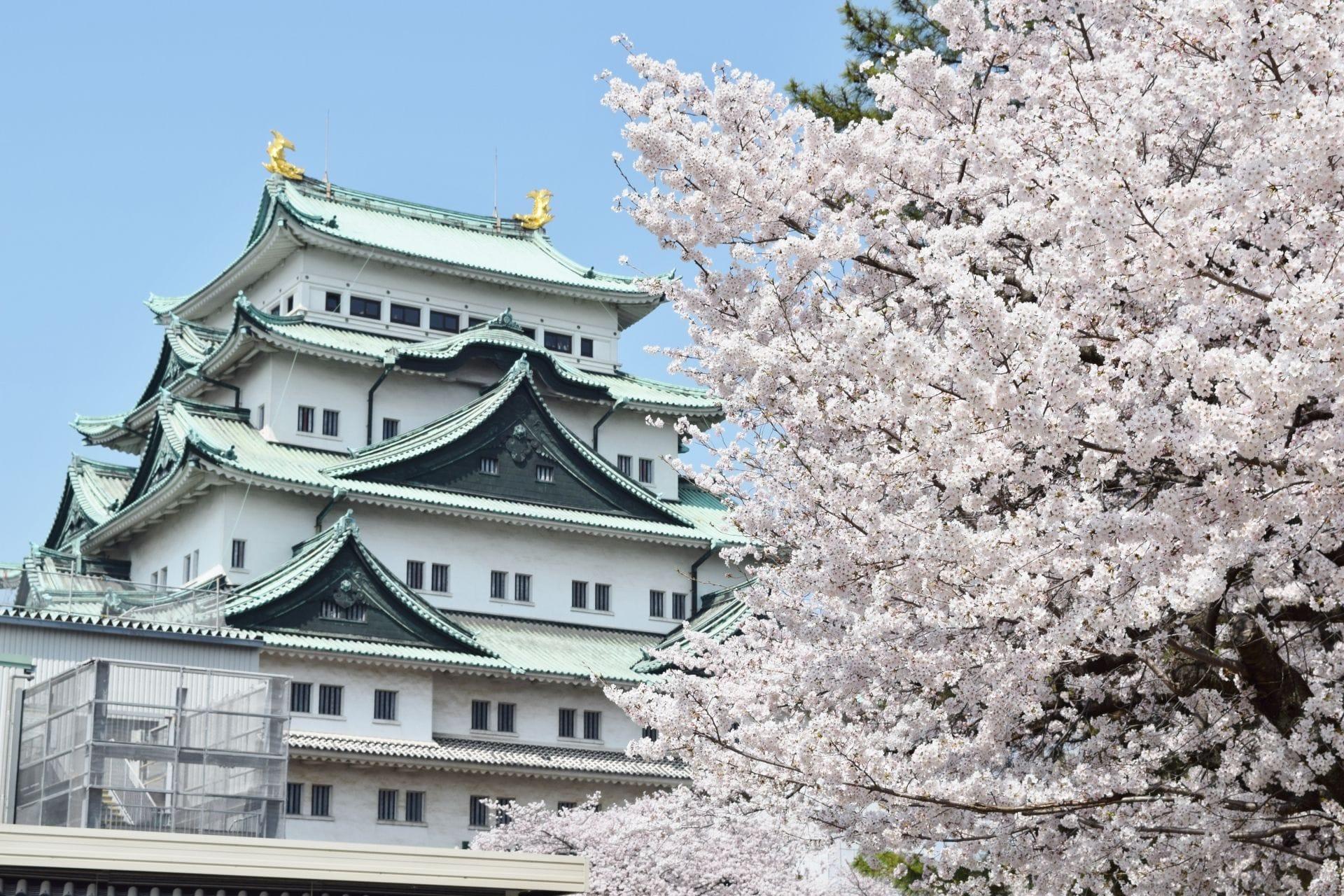 【春】日本春天旅遊食衣住行須知