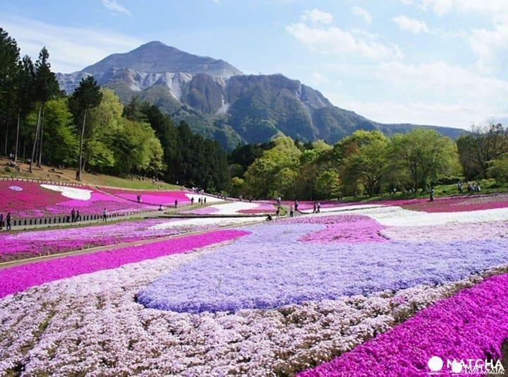 사이타마현 100% 관광 가이드! 가는 법・날씨・먹거리&쇼핑 정보・추천 관광지 베스트 35