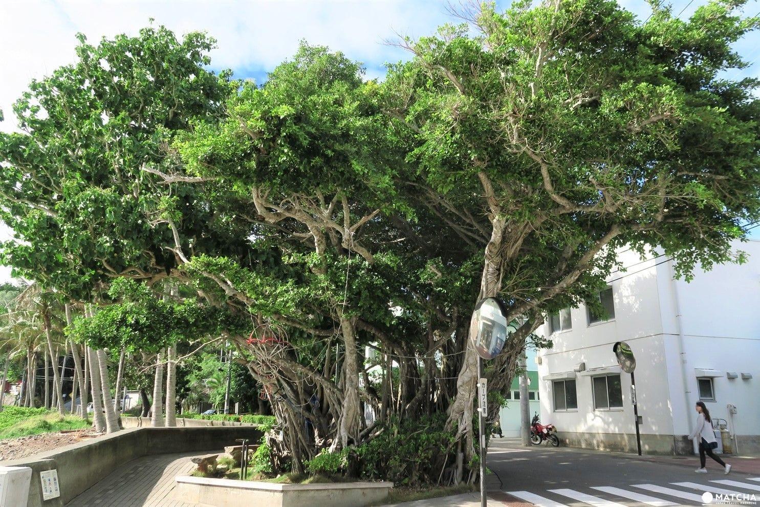 世界自然遺產小笠原「母島」沖港周邊漫步景點歸總