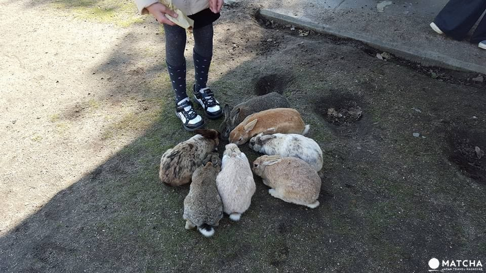 廣島-想被萌萌的兔子們包圍嗎?千萬別錯過了「大久野島」