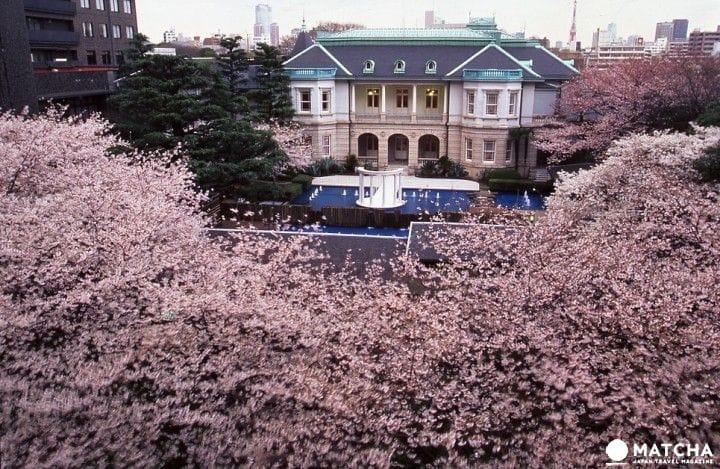 特別獨家企劃內容介紹!海內外遊客專屬的賞櫻會2017 等你來感嘆日本春天的美