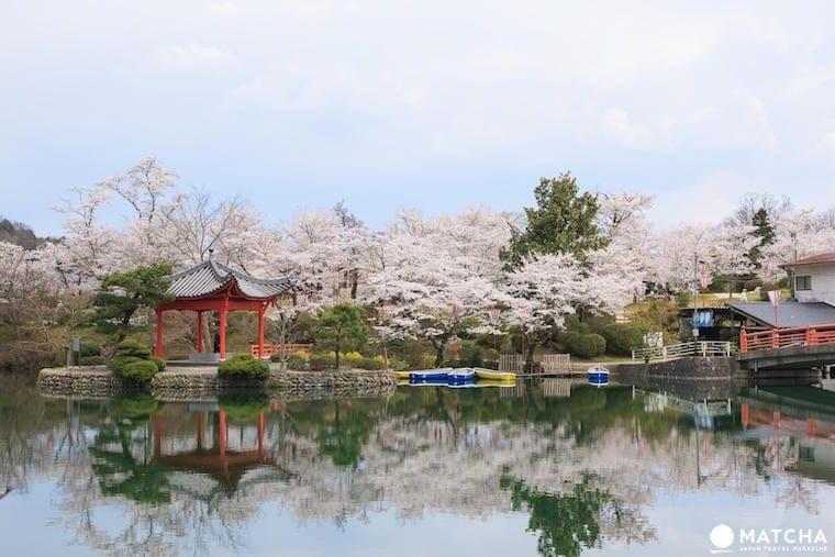 櫻花季節資訊 & 日本賞櫻景點 44選【保存版】
