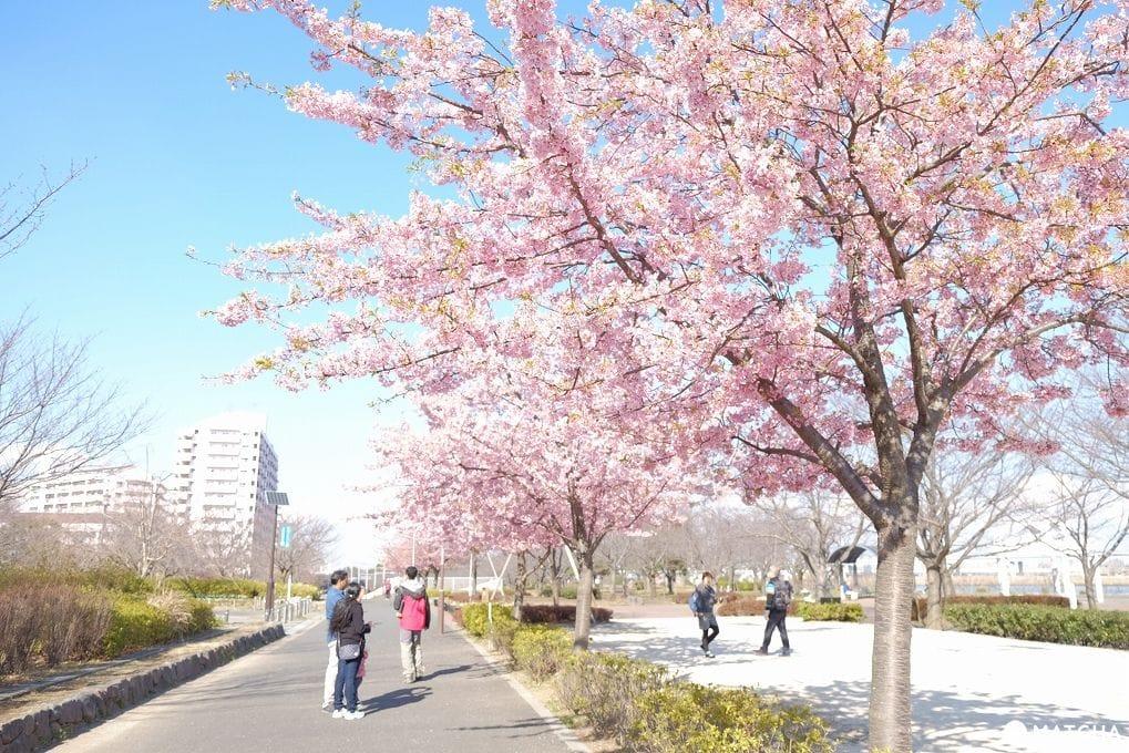 2月・3月でも花見ができる!東京都内の桜スポット