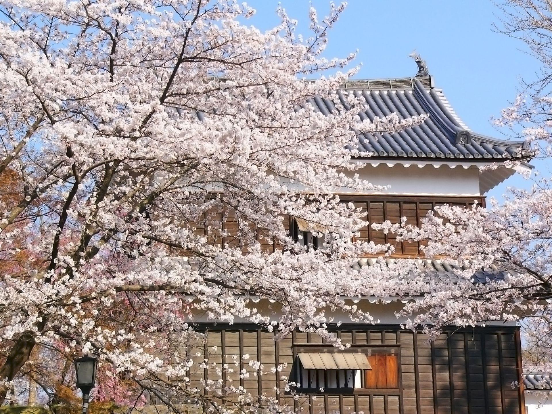 上田城跡公園千本櫻祭