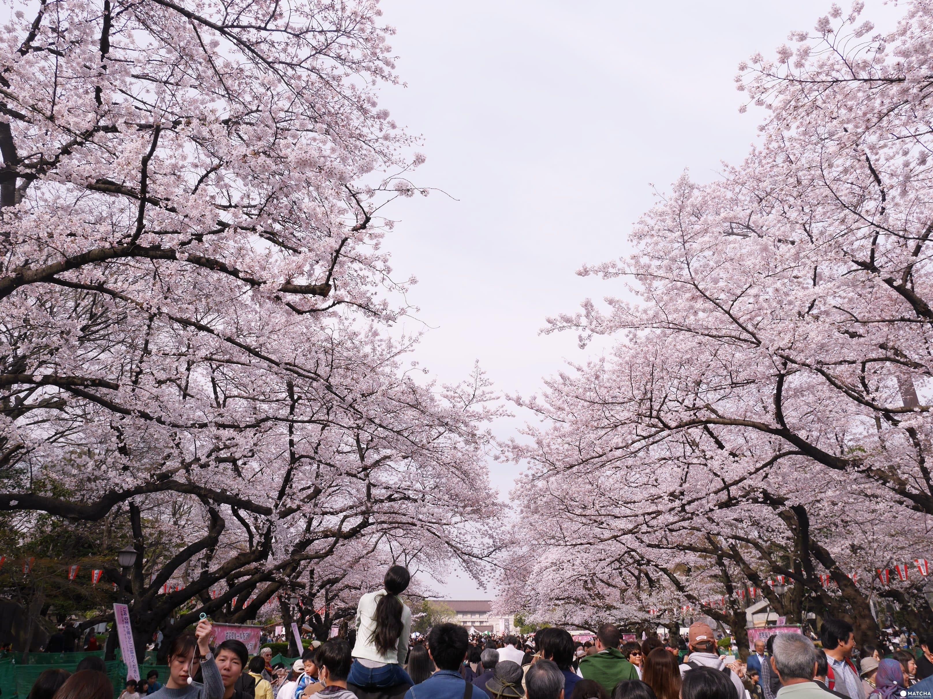 一篇入門東京都內兩大賞櫻景點附近美食