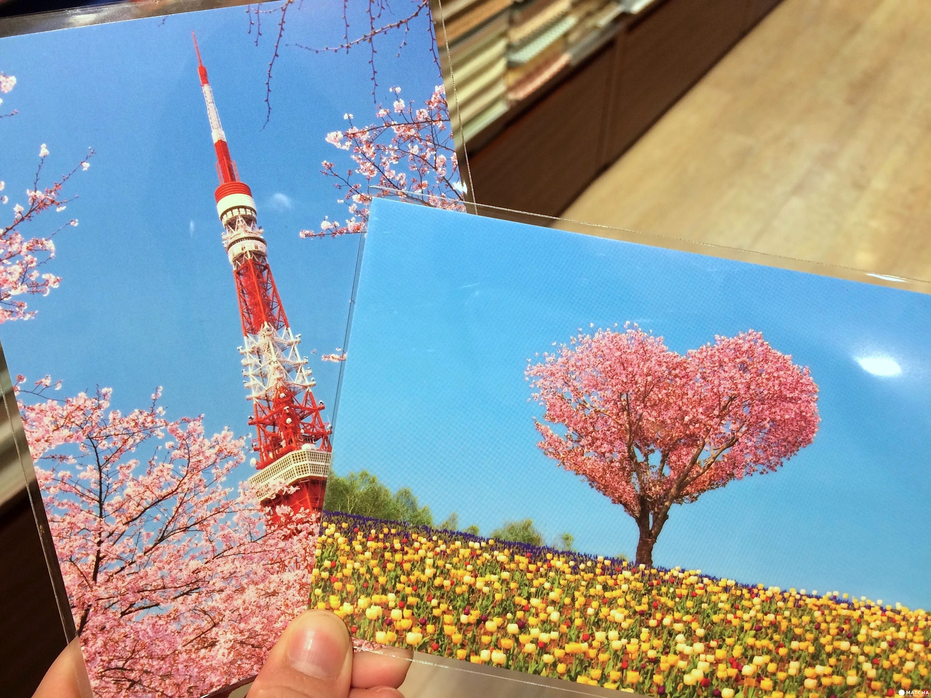 櫻花明信片