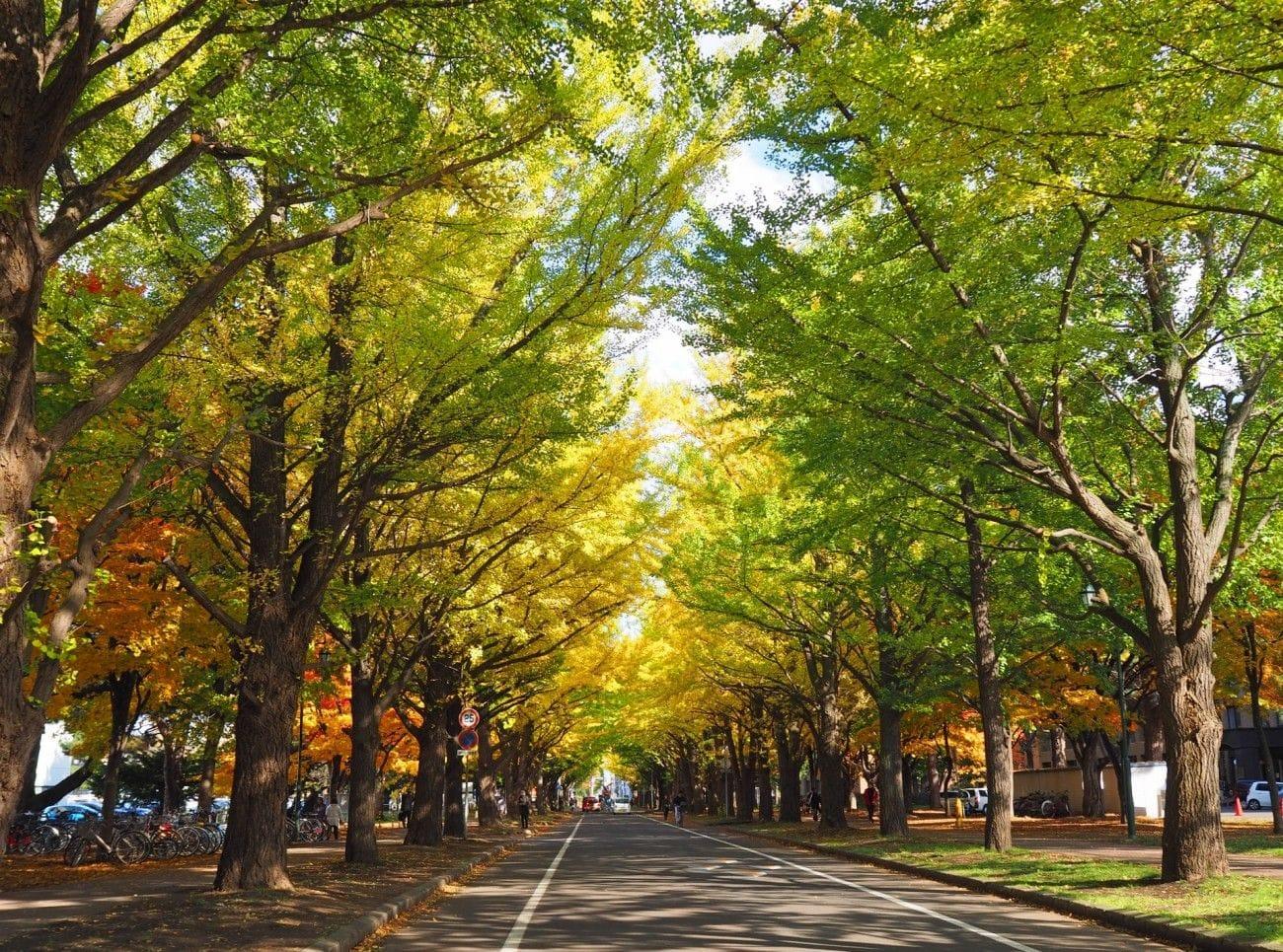 札幌自由行一日遊