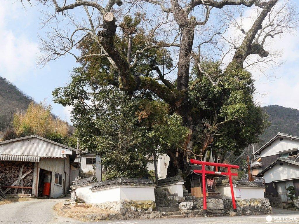 【篠山体験】800年の歴史ある丹波焼を体験し、150年の古民家に泊まり、窯元を自転車で巡る旅