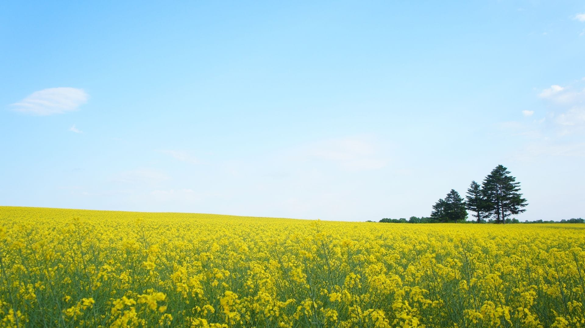 北海道五月花