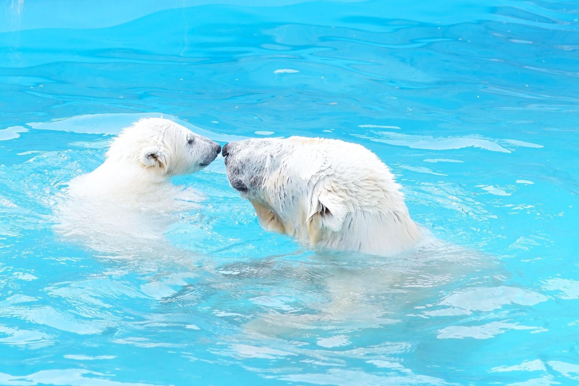 北海道才看的到!北海道人氣動物園、水族館、牧場