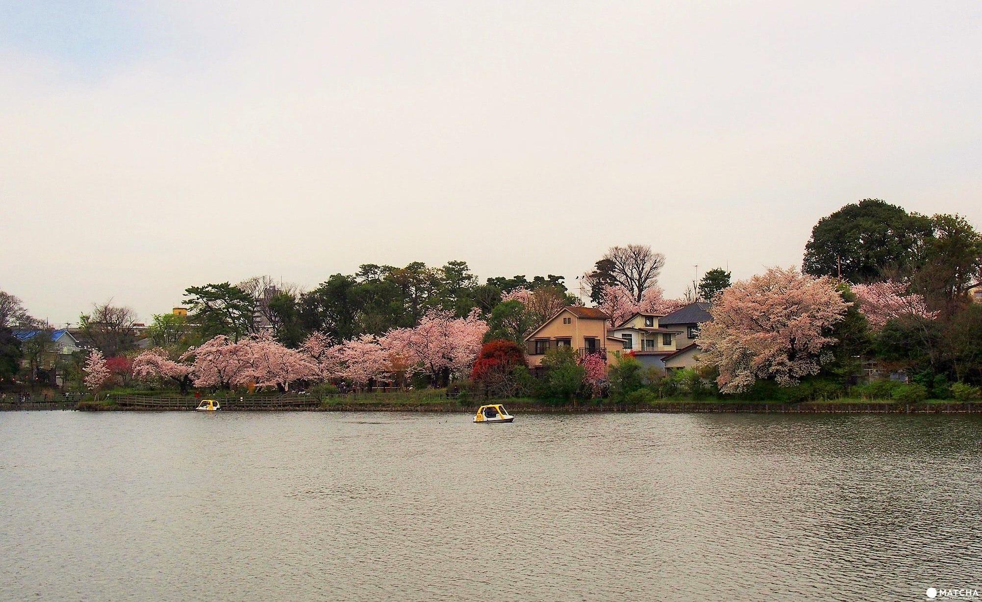 東京都心也能這麼悠哉!來「洗足池公園」走一圈當個偽在地人吧