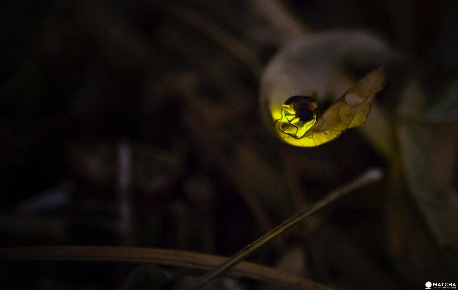 How To Take Beautiful Pictures Of Fireflies Matcha Japan Travel Web Magazine