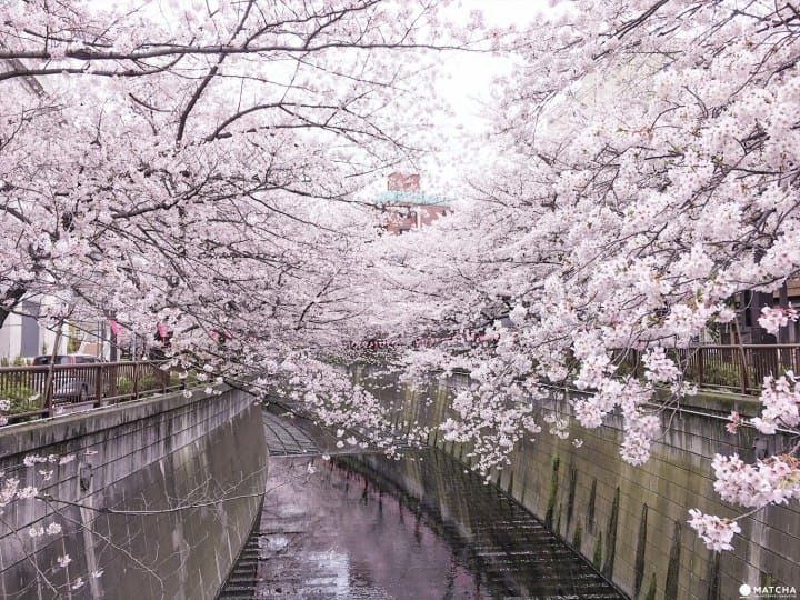15 Cherry Blossom Spots In Tokyo That You Just Have To See!