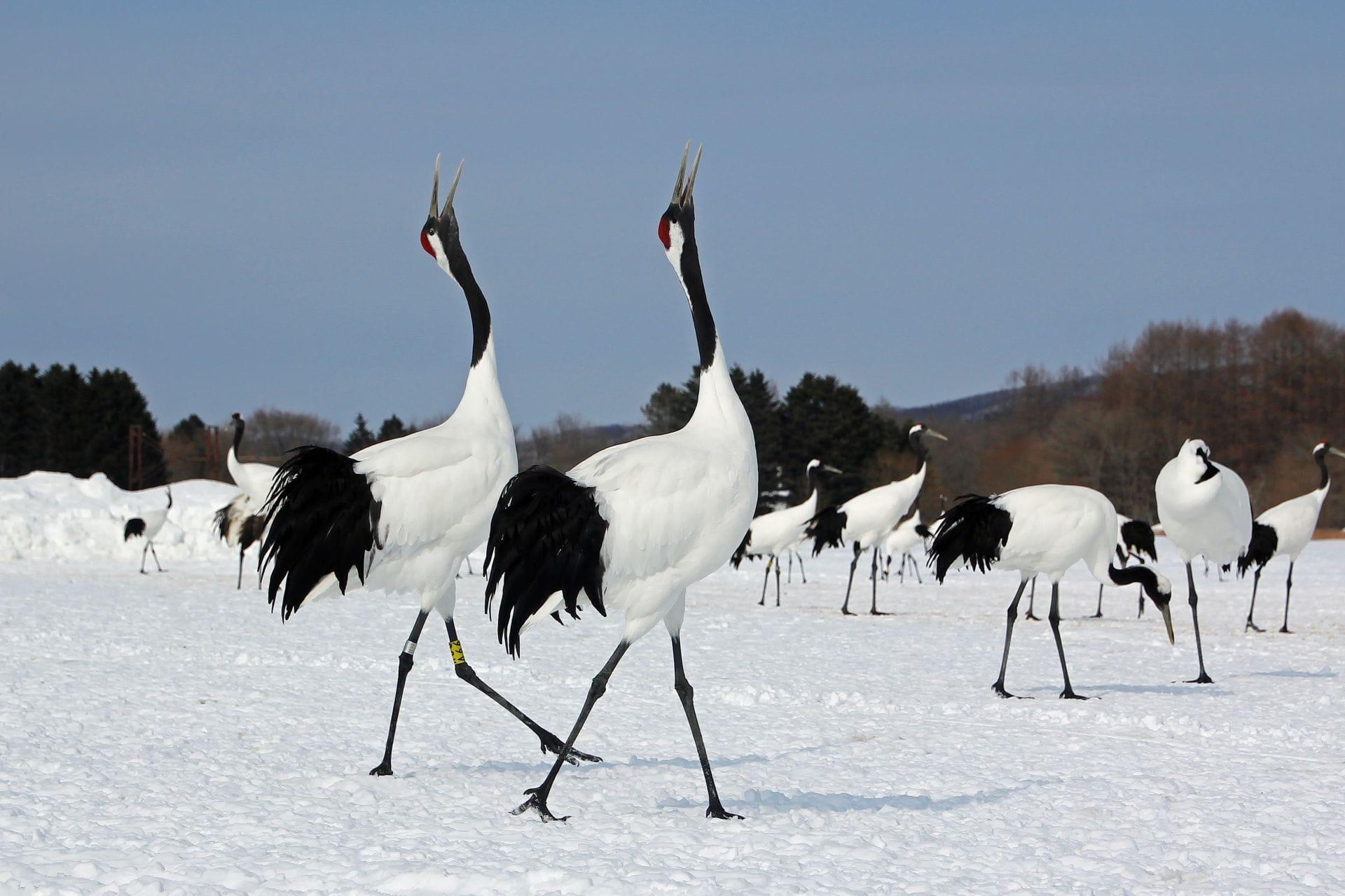 「釧路濕原國立公園 冬」的圖片搜尋結果