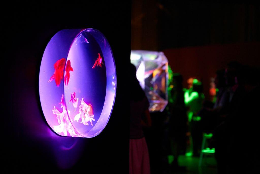 Art Aquarium金魚藝術水族館
