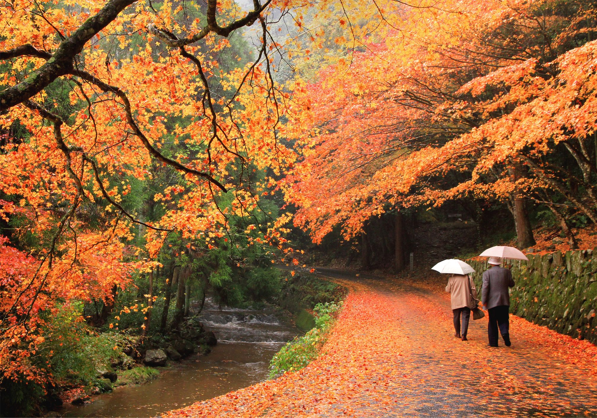 廣島秋の楓紅