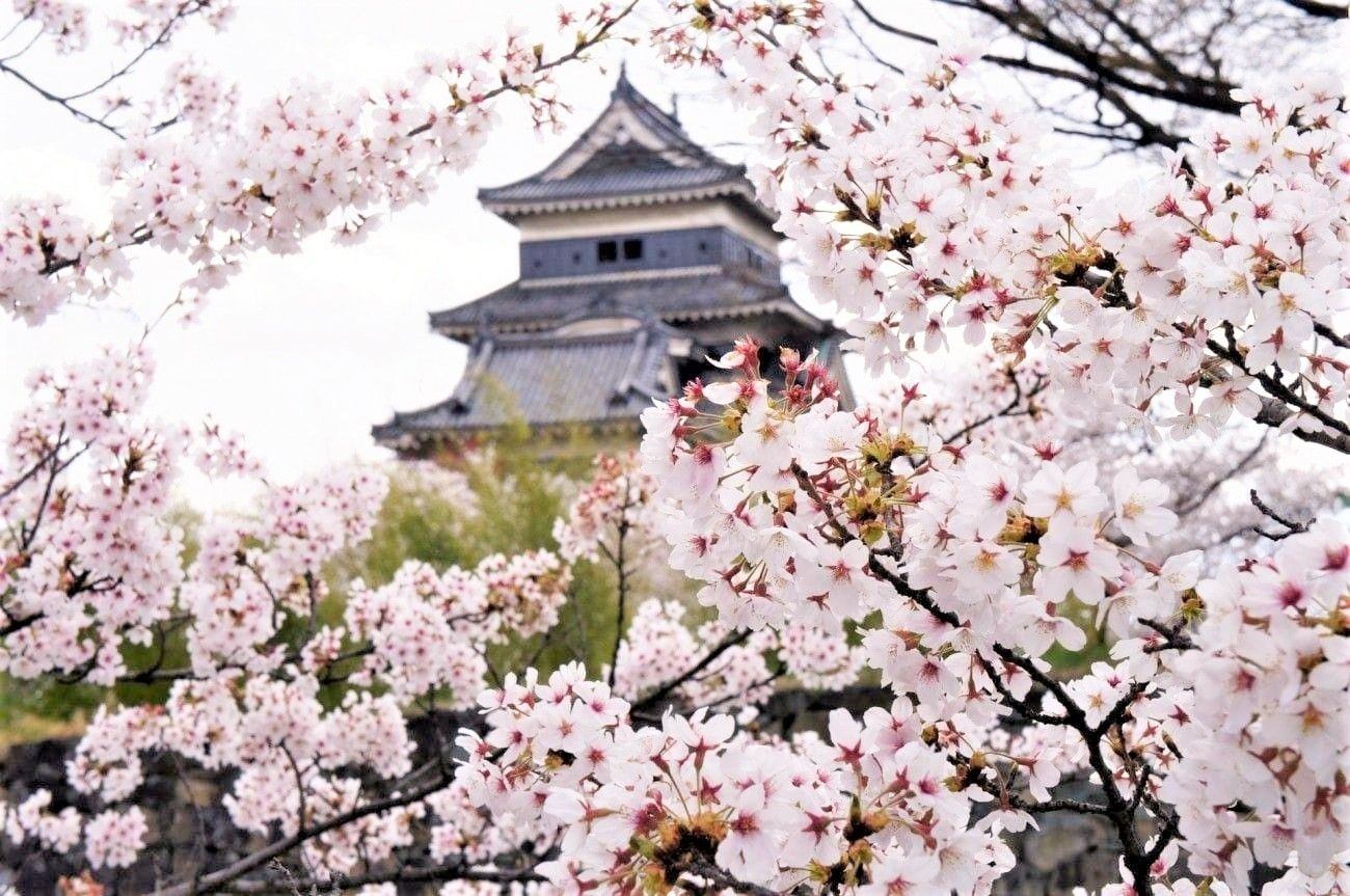 Info Musim Sakura Dan 44 Pilihan Spot Hanami Di Seluruh Jepang Tahun 2020 Matcha Situs Wisata Jepang