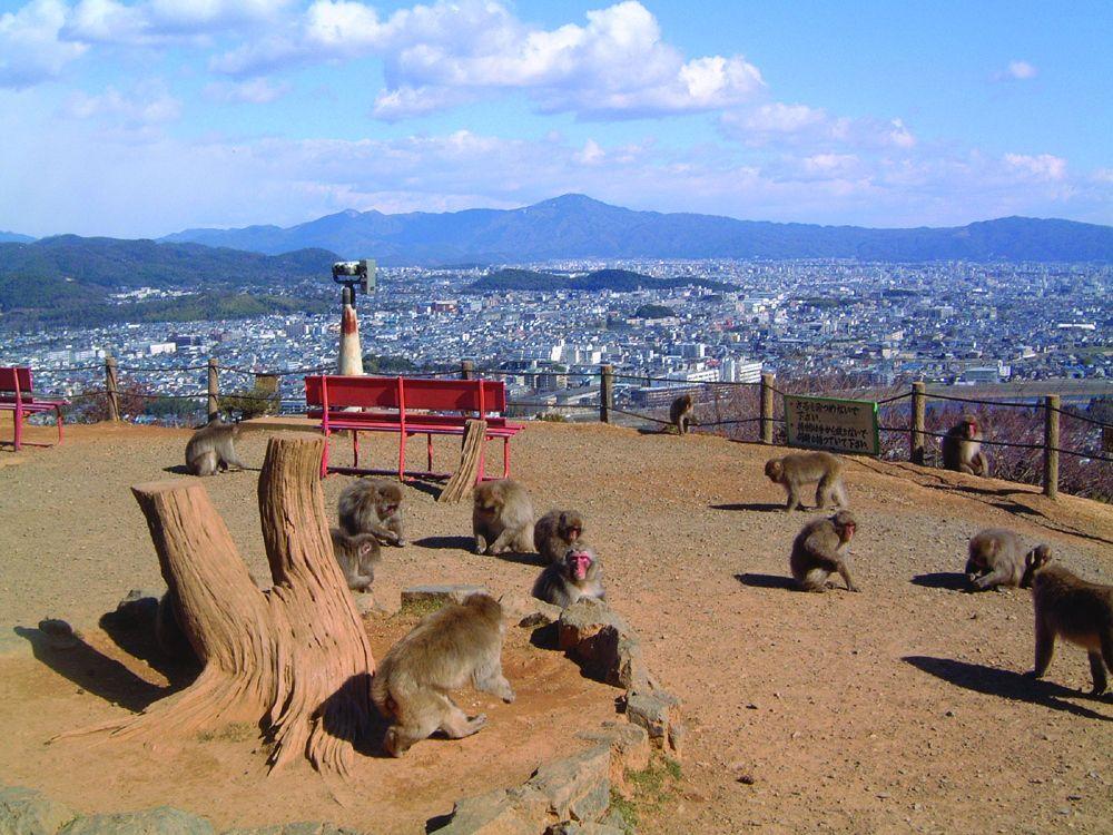 Arashiyama Monkey Park Iwayatama