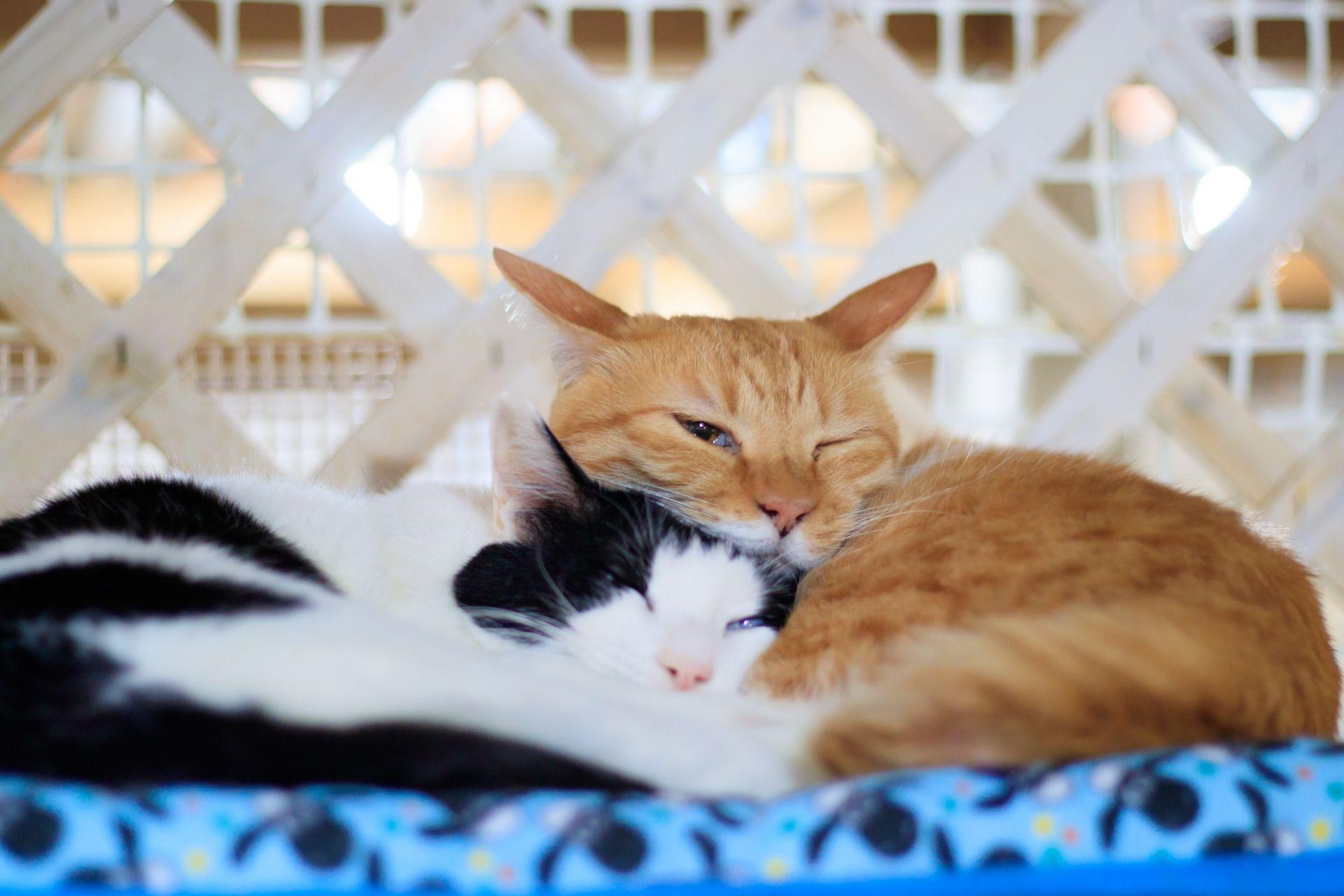 Istilah Bahasa Jepang Kafe Binatang Matcha Situs Wisata Jepang