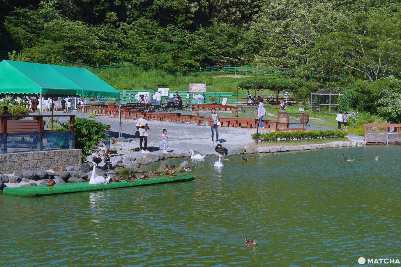 掛川花鳥園水鳥