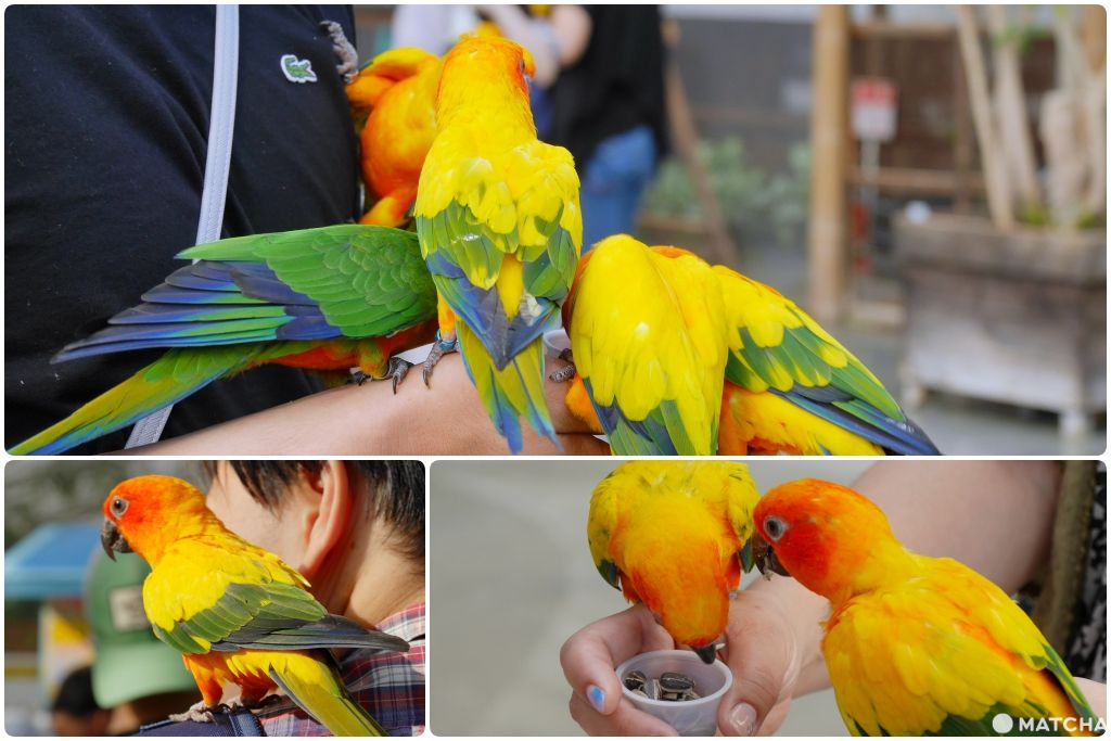 掛川花鳥園鸚鵡