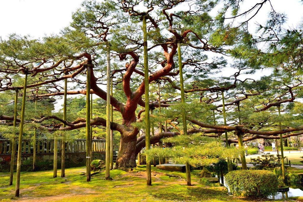 日本三大庭園 兼六園