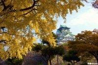 오사카의 오사카 단풍 스폿 5선~미노오 공원・오사카 성・다이센 공원 외~