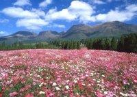 22万㎡の敷地を花々が埋め尽くす!大分県竹田市「くじゅう花公園」