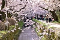The Philosopher's Walk In Kyoto - Enjoy It Every Season!