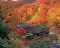 Superb Fall Colors And Hot Springs! 6 Destinations In Northern Japan