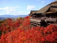 Japan's Autumn Leaves Calendar 2017: Seasonal Forecast And Best Spots!