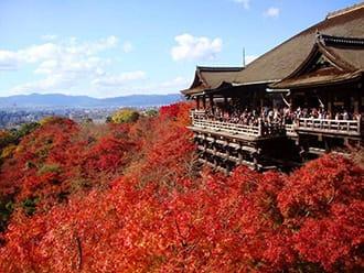 Kalender Momiji dan Spot Populer di Seluruh Jepang! (Tahun 2019)