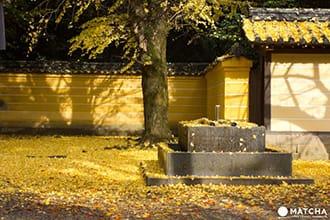 日本人なら一生に一度は訪れたい神社、香川県「金刀比羅宮」